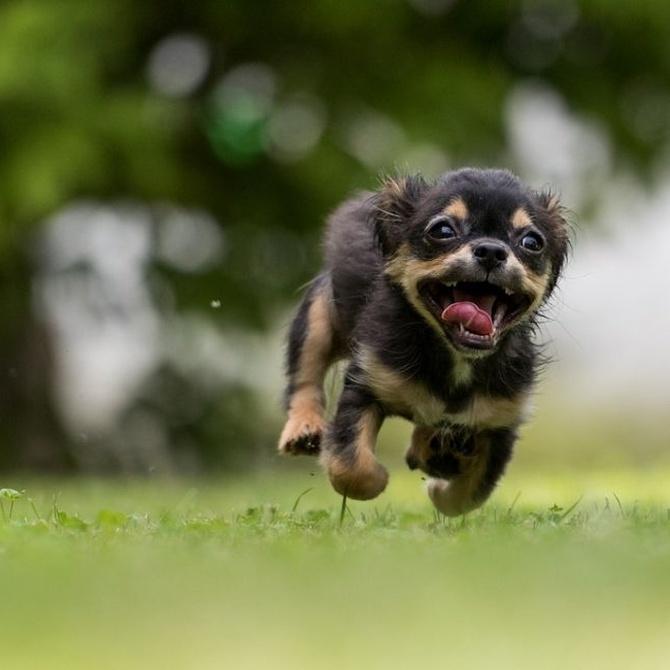 Qué hacer para que tu perro jamás muerda