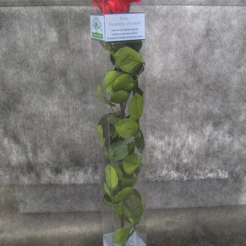 Rosa Preservada Roja: Nuestras flores de Bouquet Flores y Plantas