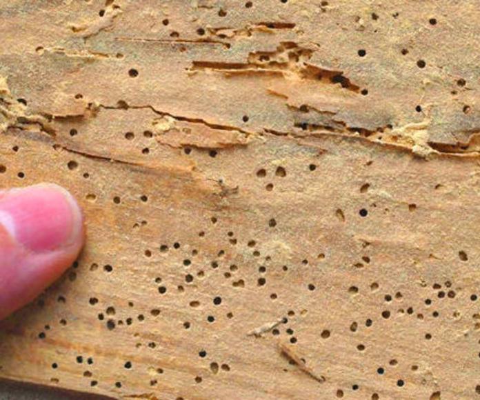 Tratamientos contra carcoma y termitas