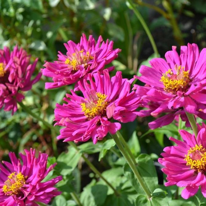 Flores para alegrar tu jardín en otoño