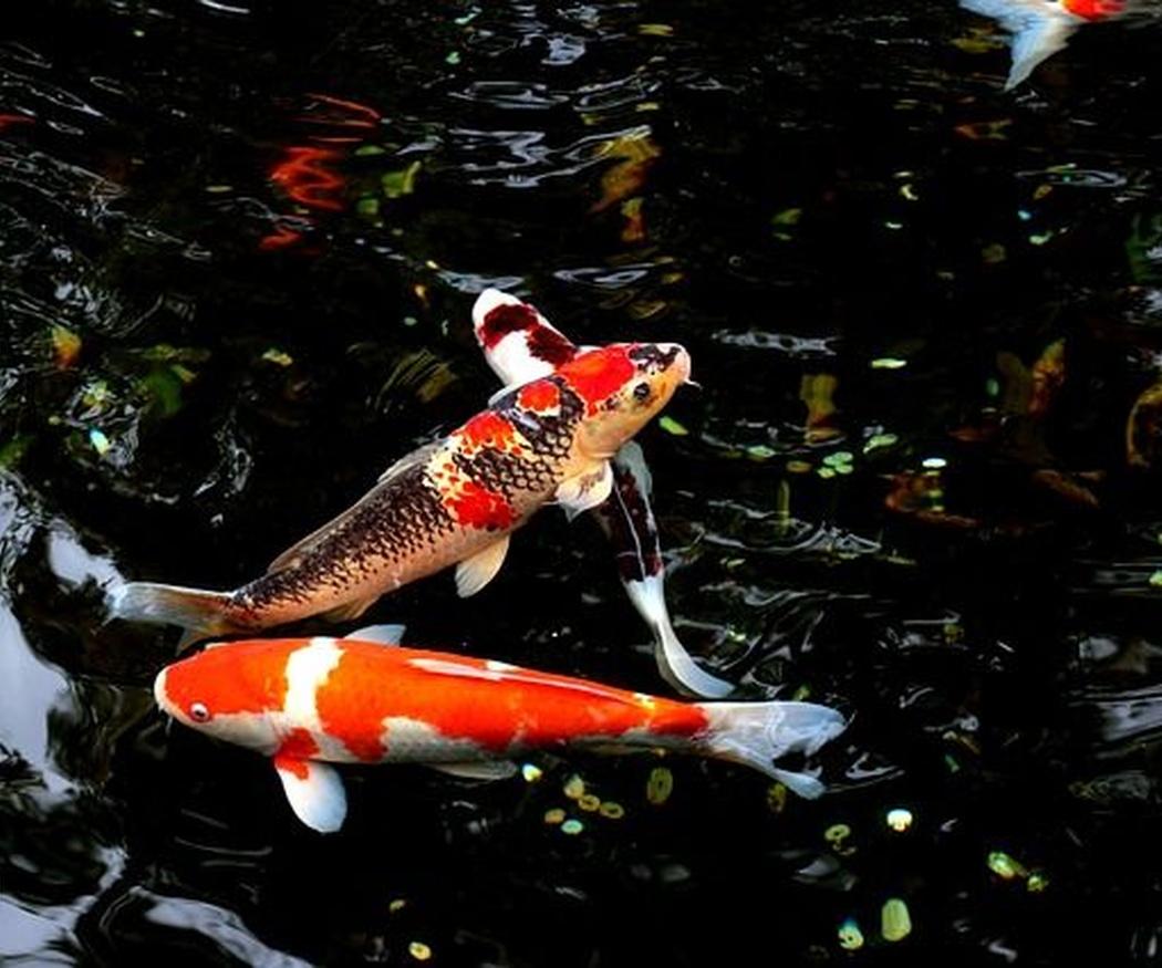 Las plantas y especies animales aptas para tu estanque