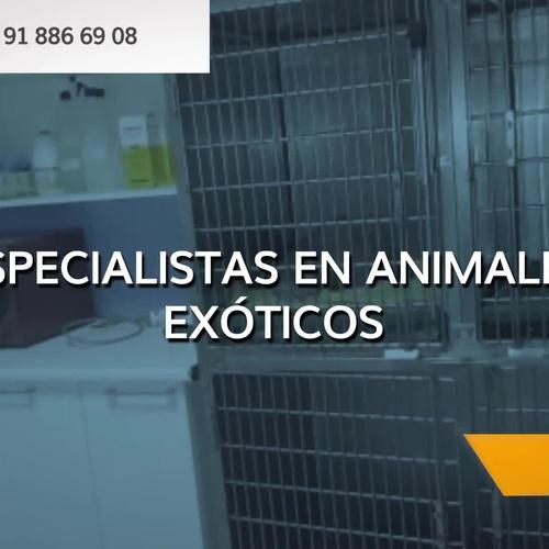 Veterinarios en Camarma de Esteruelas | Clínica Veterinaria Camarma