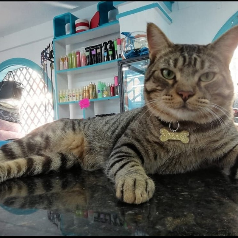 Peluquería felina: Servicios de Dogmopolitan