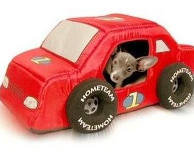 Viajar en coche con mascota