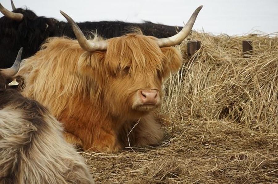 5 exigencias sanitarias para la cría de ganado