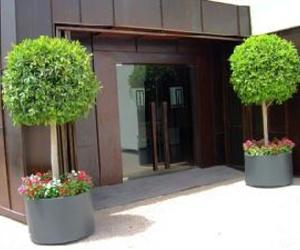 Galería de Arrocerías en Elche / Elx | Restaurante Matola