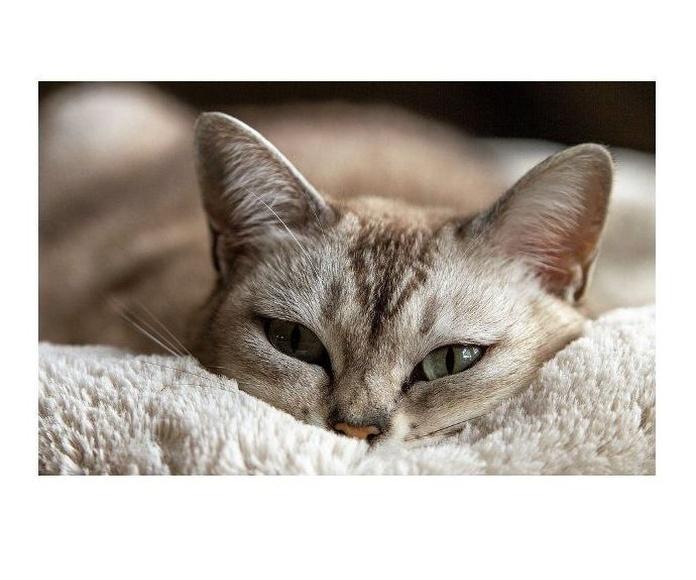 El 20 de Febrero, Día internacional del gato