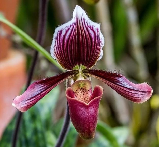 Orquídea de los Recuerdos : Terapias de Terapias Alternativas Isabel