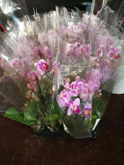 Orquídeas: Productos de Maquinaria El Casar