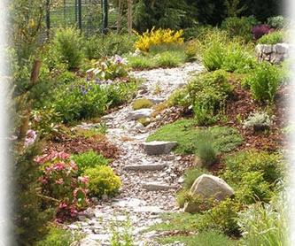 Tratamientos Fitosanitarios: servicios de Plante Verde