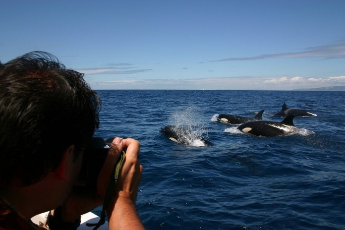 Orcas desde el Dolphin Safari