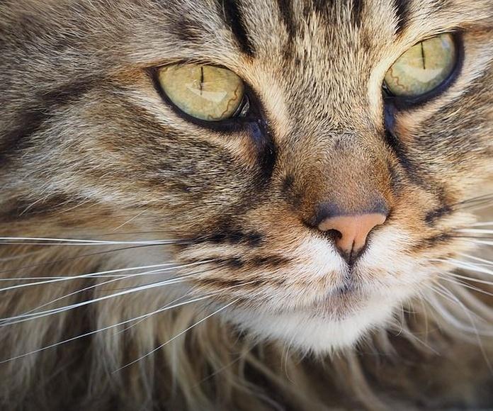 Peluquería felina: Servicios de Centro Veterinario Juan XXIII