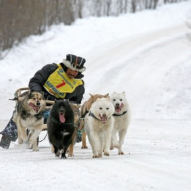 Las enfermedades caninas más comunes en invierno