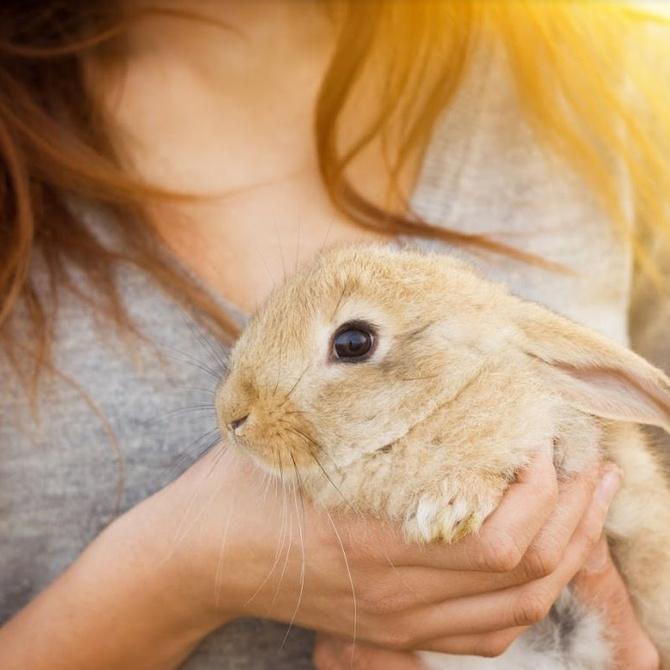 Cuidados y consejos para cuidar un conejo