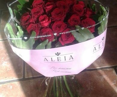 Rosas ALEIA