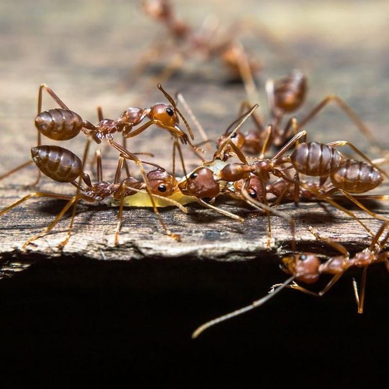 Hormigas: Servicios de Dys - Hy