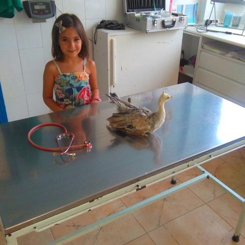 Veterinarios   en La Adrada | Clínica Veterinaria La Adrada