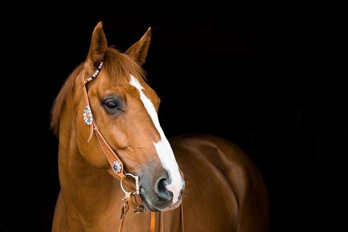 Seguros para caballos: Correduría y asesoría de Seguros Vázquez Montequinto