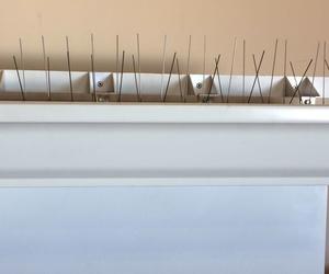 Pinchos para que no se posen las palomas en el Canalon| Alcarria Pluviales Canalones