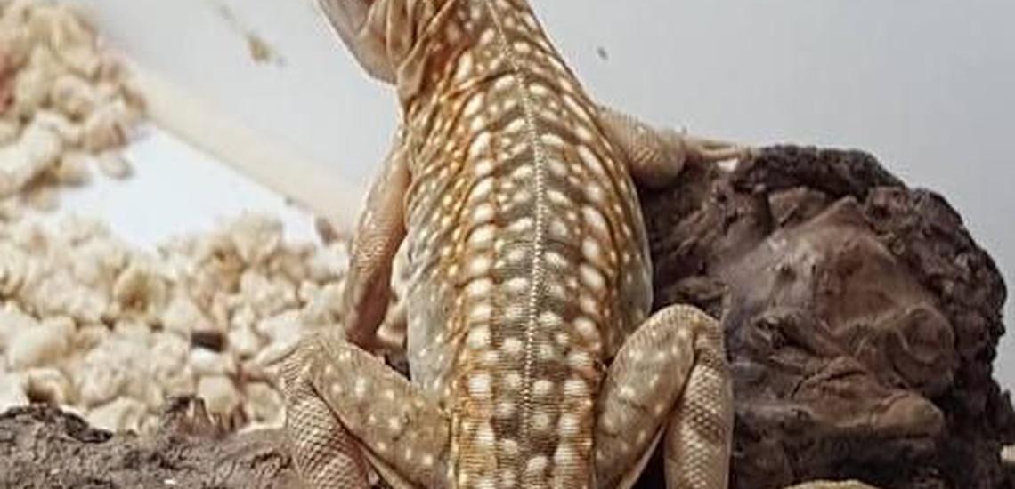 Alimento vivo para reptiles en el Baix Llobregat