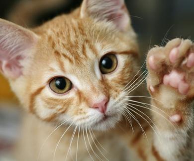 Vacunación antirrábica obligatoria para perros, gatos y hurones