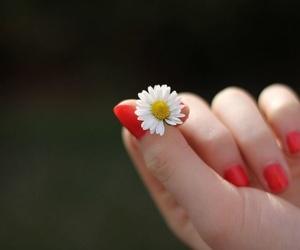 Bioterapia de manos