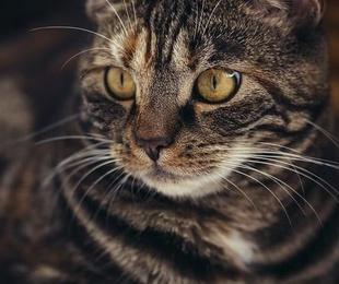 Residencia para gatos y mascotas en Getxo