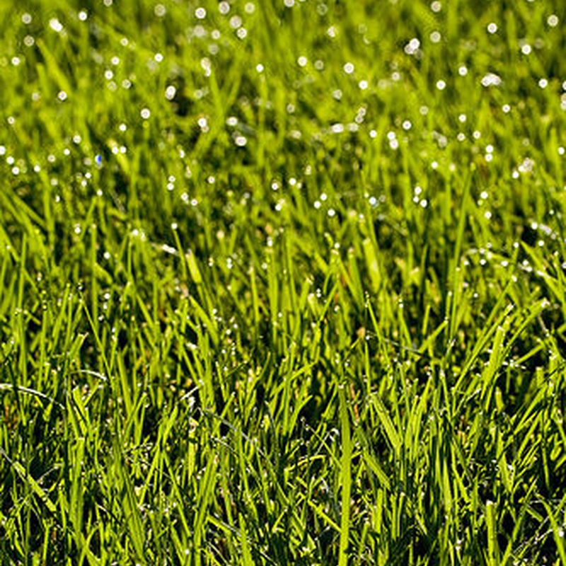 Abonos: Productos y Servicios de Jardines Patxi Lorategiak