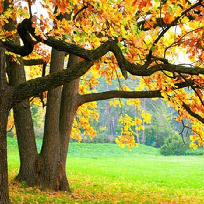 Consejos para el jardín en otoño