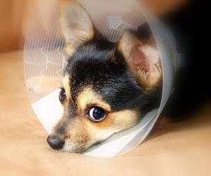 Clínica Veterinaria Akos, tratamientos específicos e individualizados para tu mascota