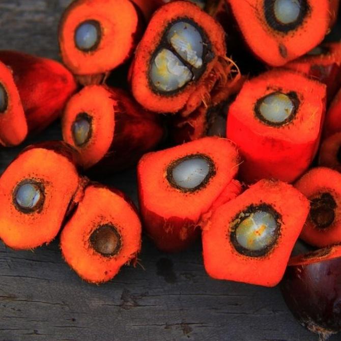 La polémica del aceite de palma