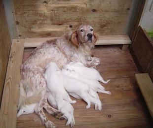 Residencia canina para cazadores en Bizkaia