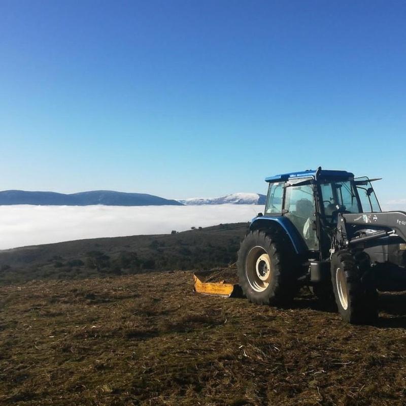Desbroce: Productos y servicios de Servicios Forestales FsV