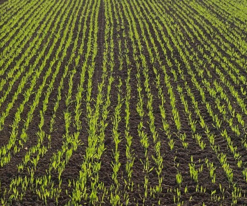 ¿Para qué se utilizan los productos fitosanitarios?