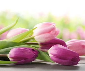 Curiosidades sobre los tulipanes