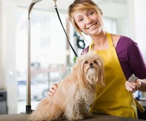 Cursos de peluquería canina en Alzira