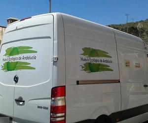 Distribución de huevos ecológicos en Granada