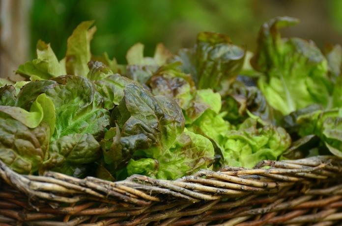Horticultura: Productos de Floristería La Salud