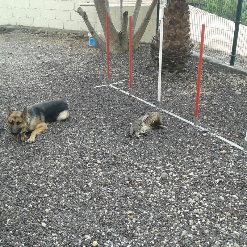 Cursos adiestramientos perros: Productos y servicios de Don Perro