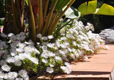 Ikebana, meditación a través de las flores