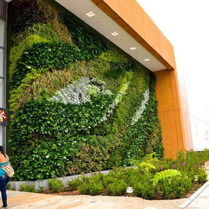¿Qué son los jardines verticales?