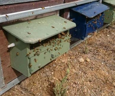 Campaña de polen