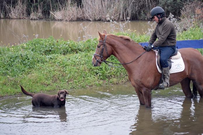 Rutas a caballo: Servicios de Club Hípico Lira Cubero