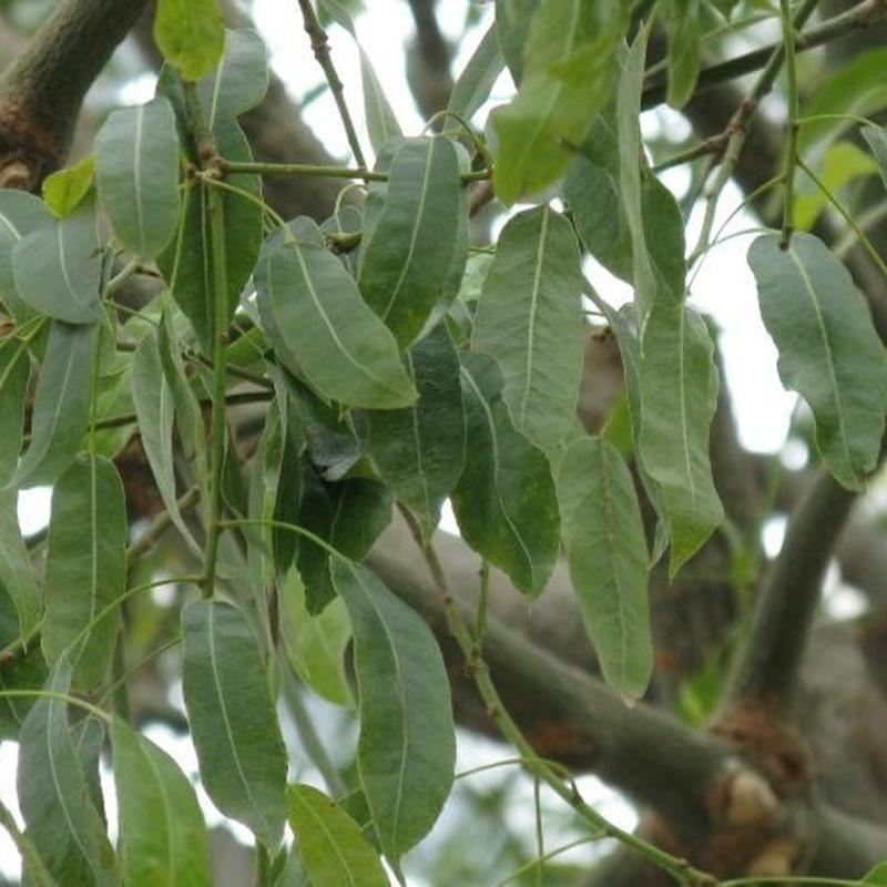 Árboles y plantas: Productos y servicios de Marga Garden