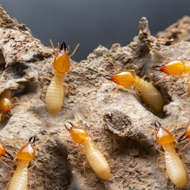 Evidencias definitivas para saber si tienes termitas