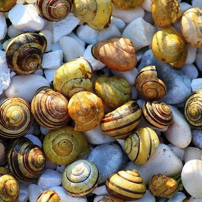 Propiedades nutricionales de los caracoles