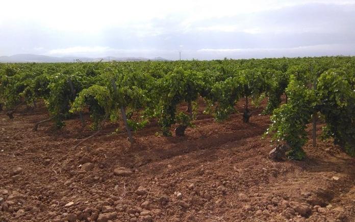 Venta de viña zona Casas de Juan Ramón: Inmuebles de Inmobiliaria Minerva