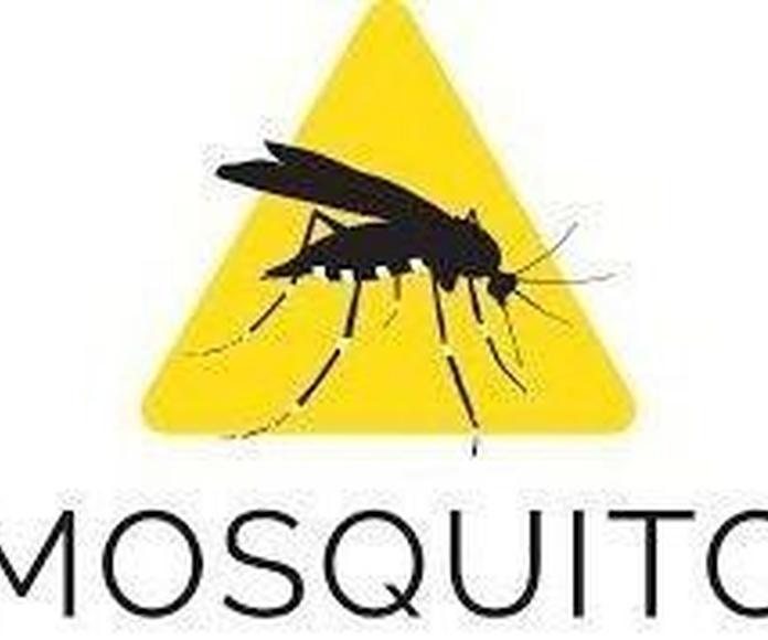 Consejos frente al mosquito Tigre.