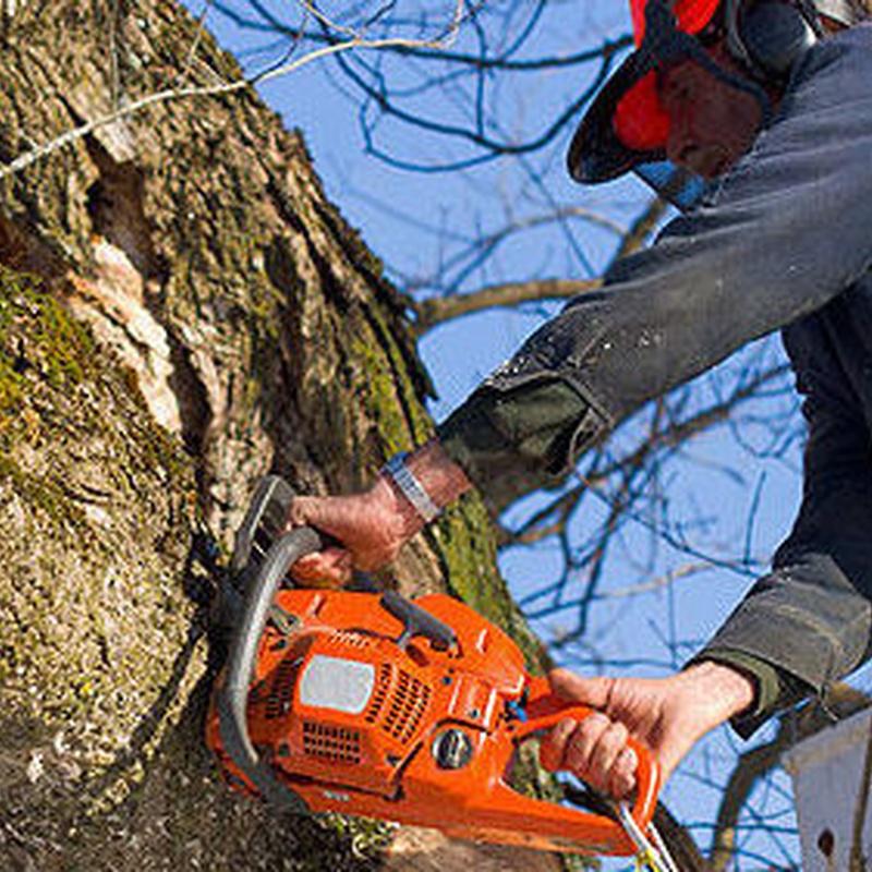 Tala de árboles: Servicios de Voip Jardines