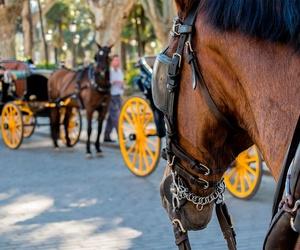 Recorridos en coche de caballos por Sevilla